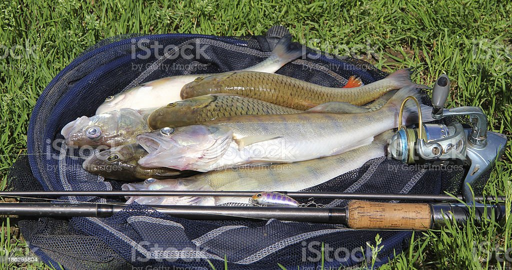 fishing catch on grass royalty-free stock photo