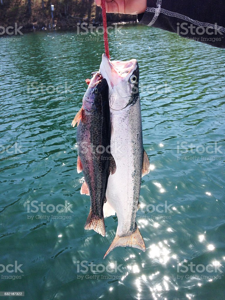 Fishing for Rainbow Trout stock photo