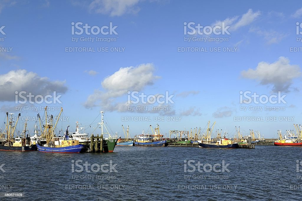 Fishing harbour of Lauwersoog with ships for shrimp fishing stock photo
