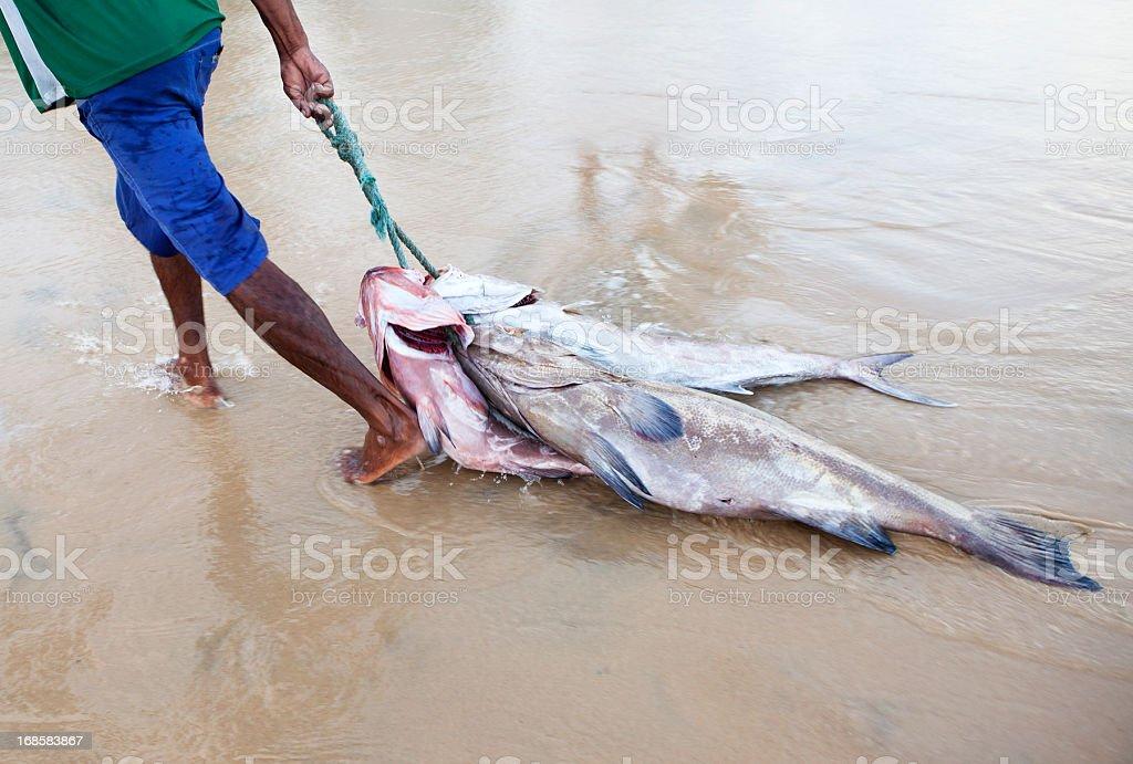 Fishing Industry in Fortaleza, Brasil royalty-free stock photo