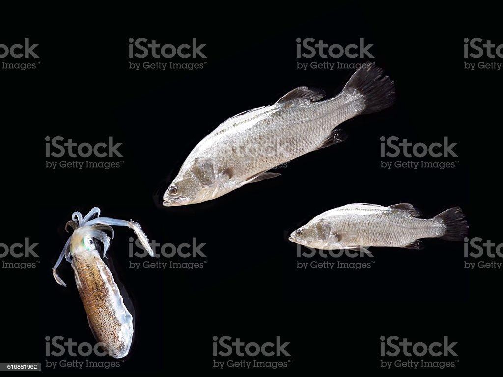Fishing leisure stock photo