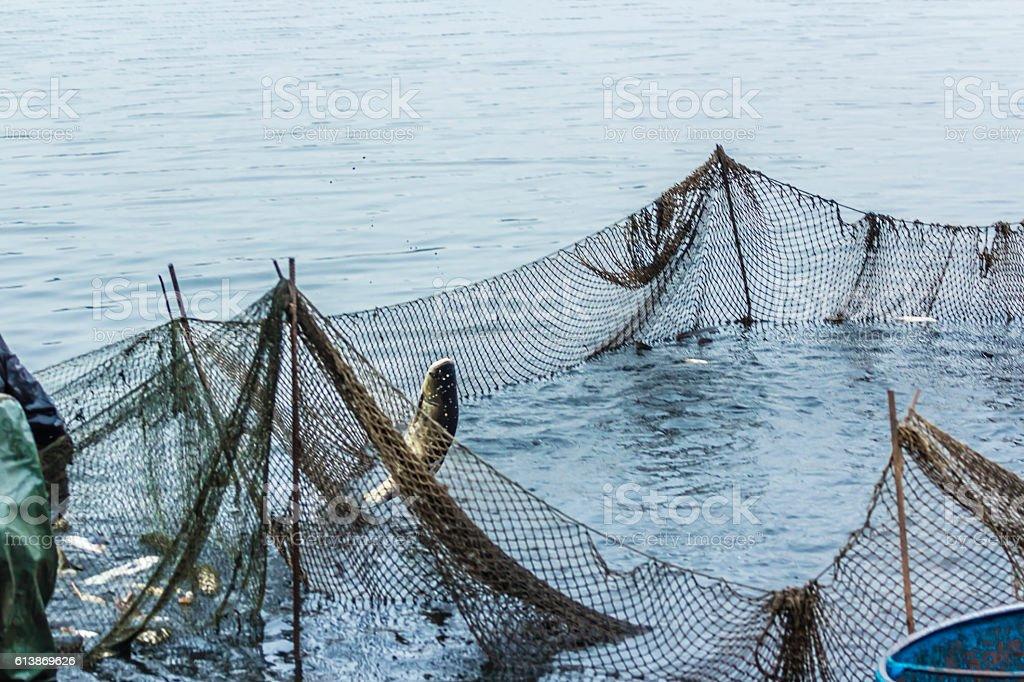 Fishing on the lake. Men pulls a fish net stock photo