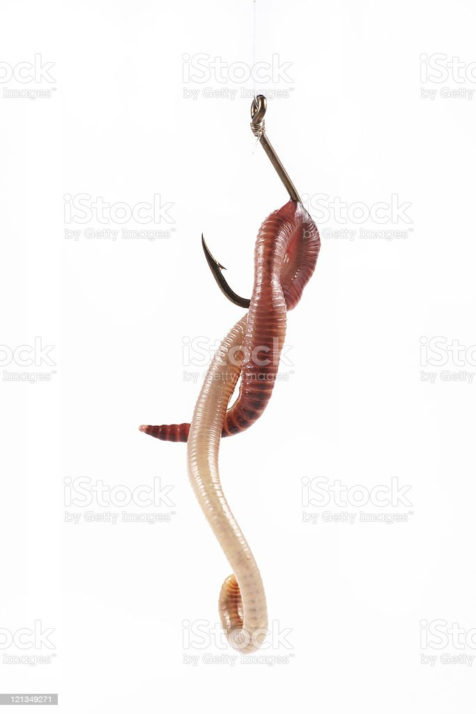 Fishing, red worm on the hook stock photo