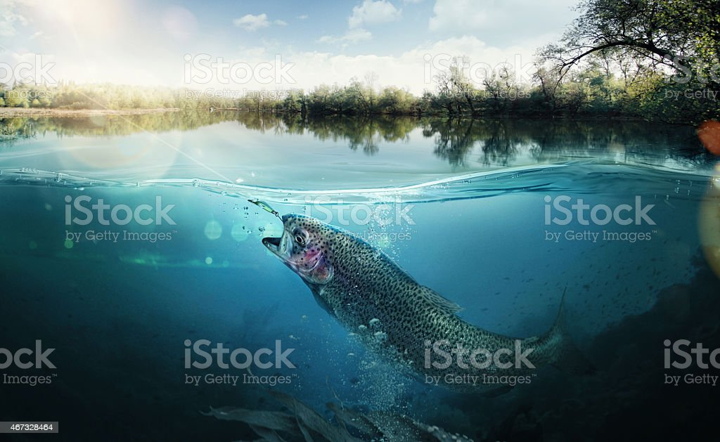 Fishing. The fish underwater stock photo