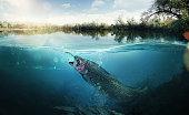 Fishing. The fish underwater