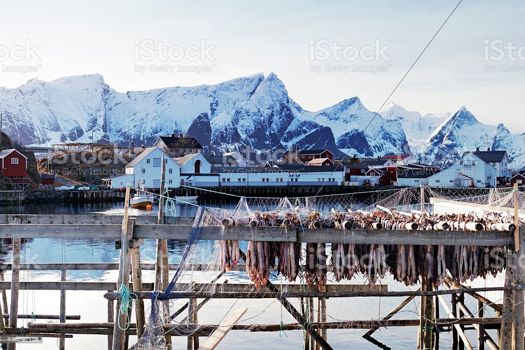 Fishing village Hamnoy and drying stockfish, Lofoten Islands,Norway stock photo