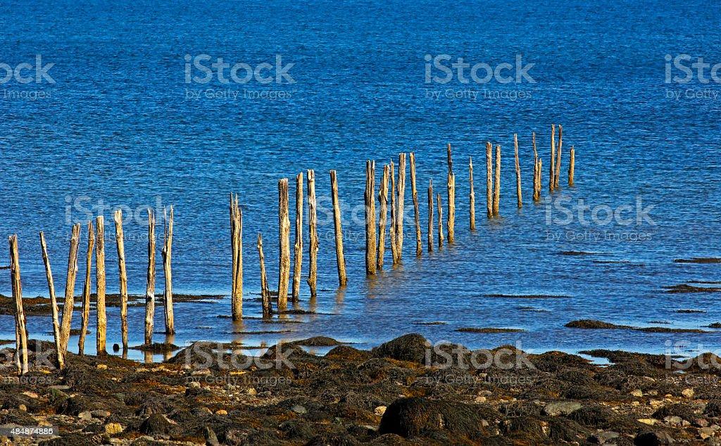 Fishing Weir Wood Poles stock photo