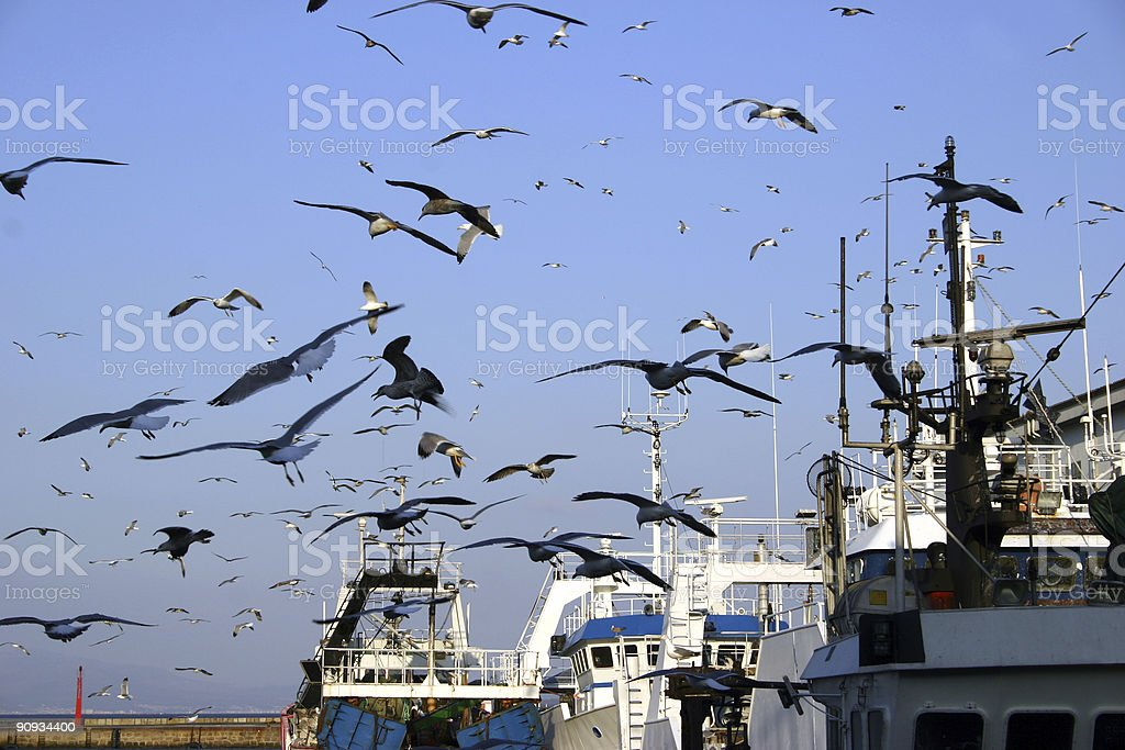 Fishingboats and seagulls royalty-free stock photo