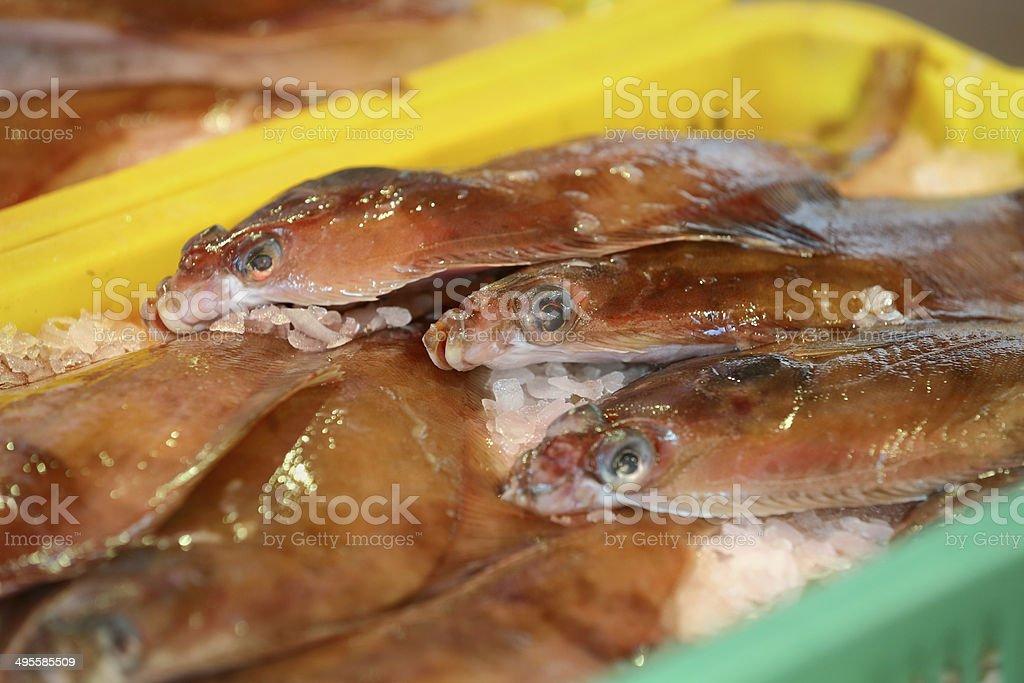 Fishmarket Fresh Sole royalty-free stock photo