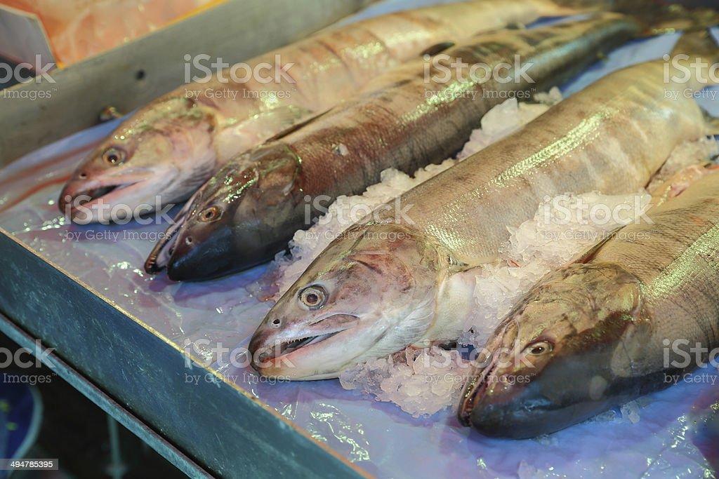 Fishmarket Salmon royalty-free stock photo
