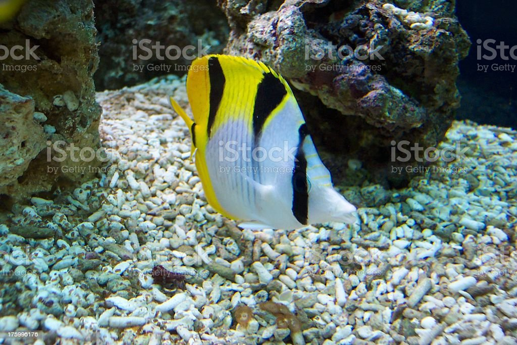 Fish'n royalty-free stock photo