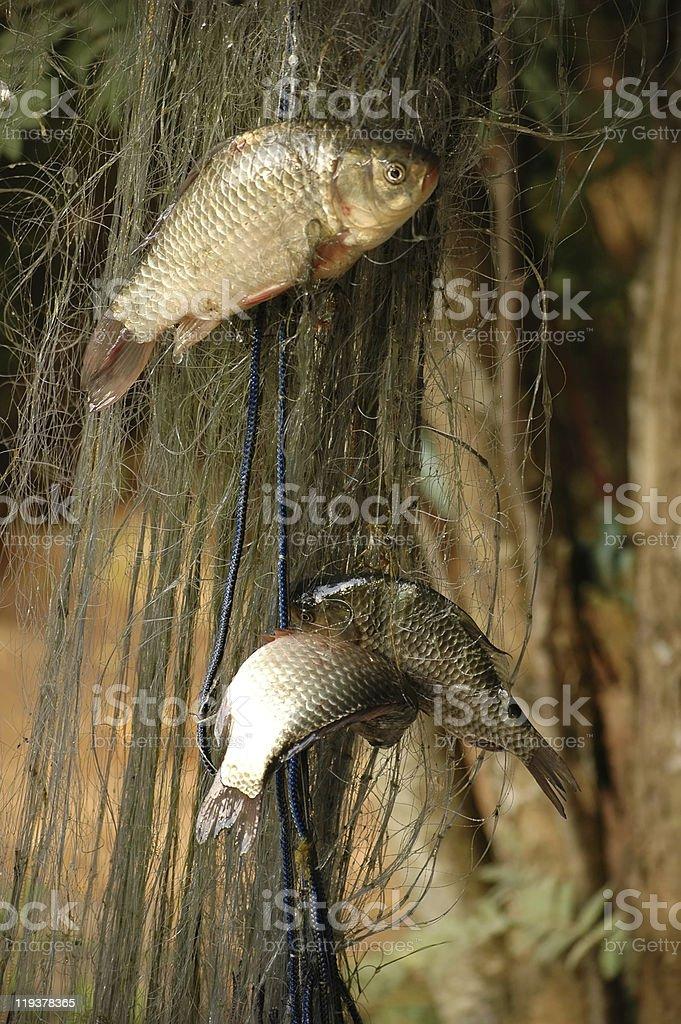 fishnet stock photo