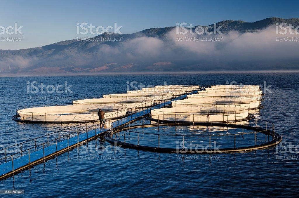 Fishpond stock photo