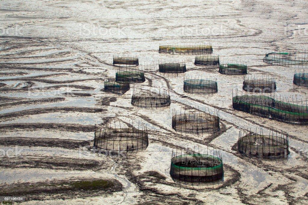 Fishpot on mud flat in Xiapu, Fujian Province, China. stock photo
