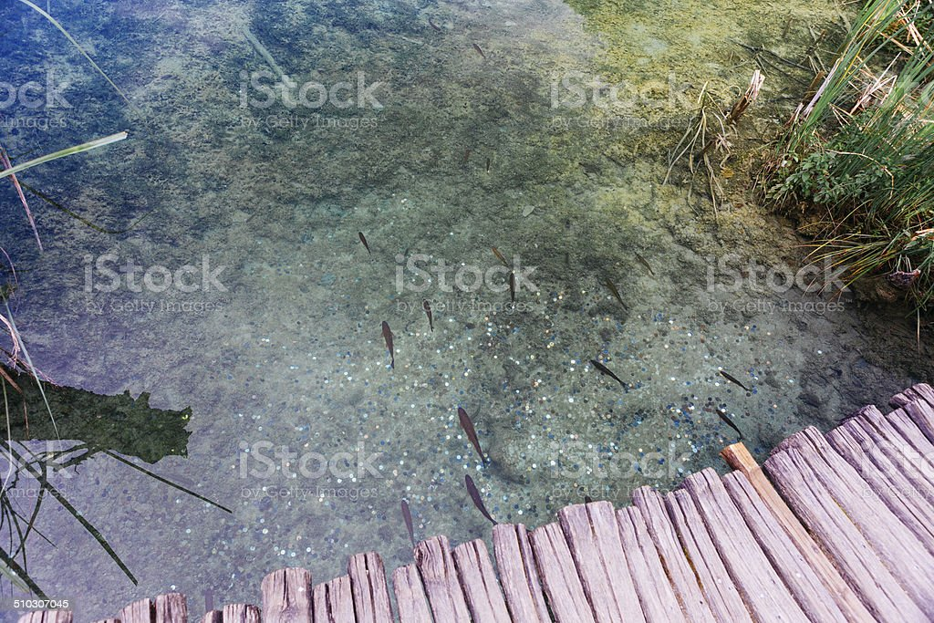 fishs and moneys royalty-free stock photo
