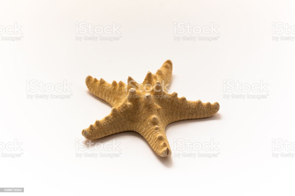 fishstar stock photo