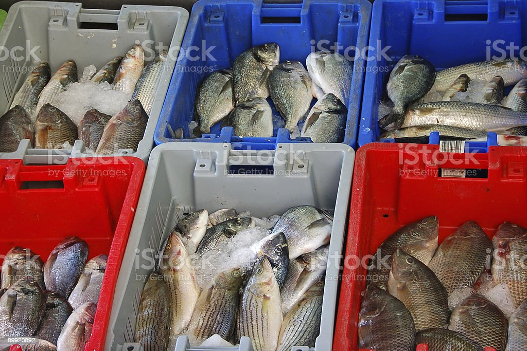 Fishy stock photo