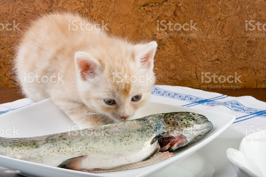 Fishy smell royalty-free stock photo