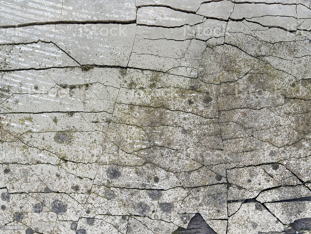 fissured back stock photo