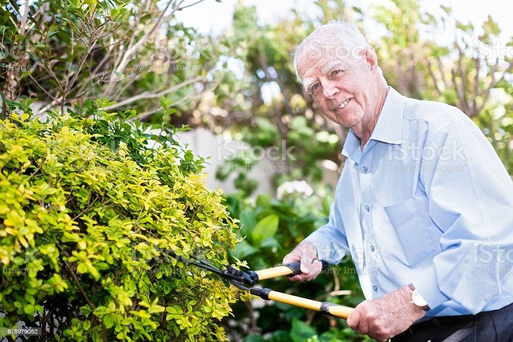 Fit 90-year-old man smiles as he clips garden hedge stock photo
