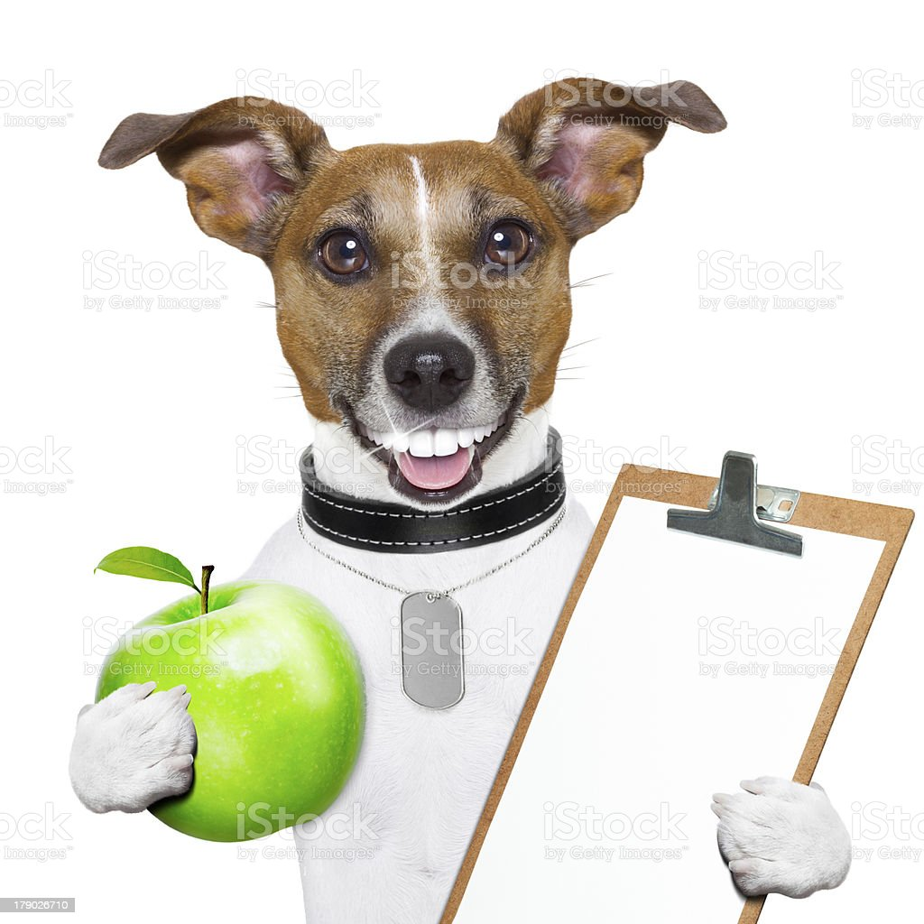 fitness and healthy dog stock photo