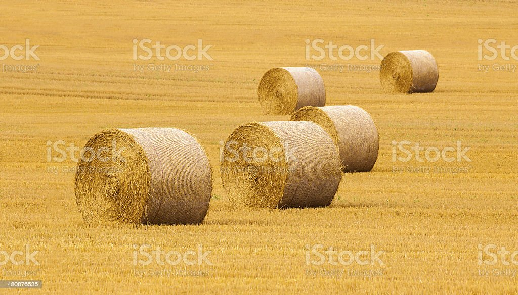 Five bales of hay in a field of stubble stock photo