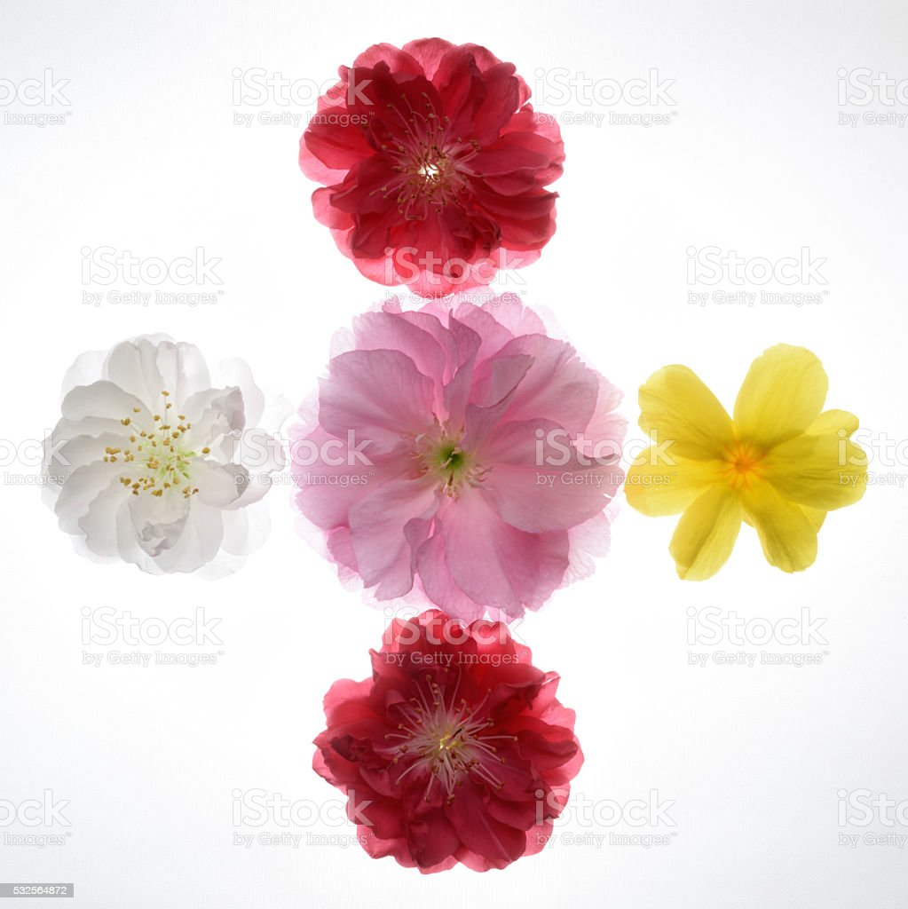 Five blooming flowers head stock photo