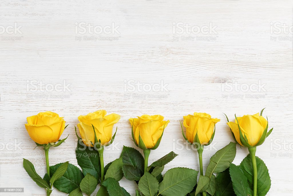Five buds of yellow roses in a row stock photo