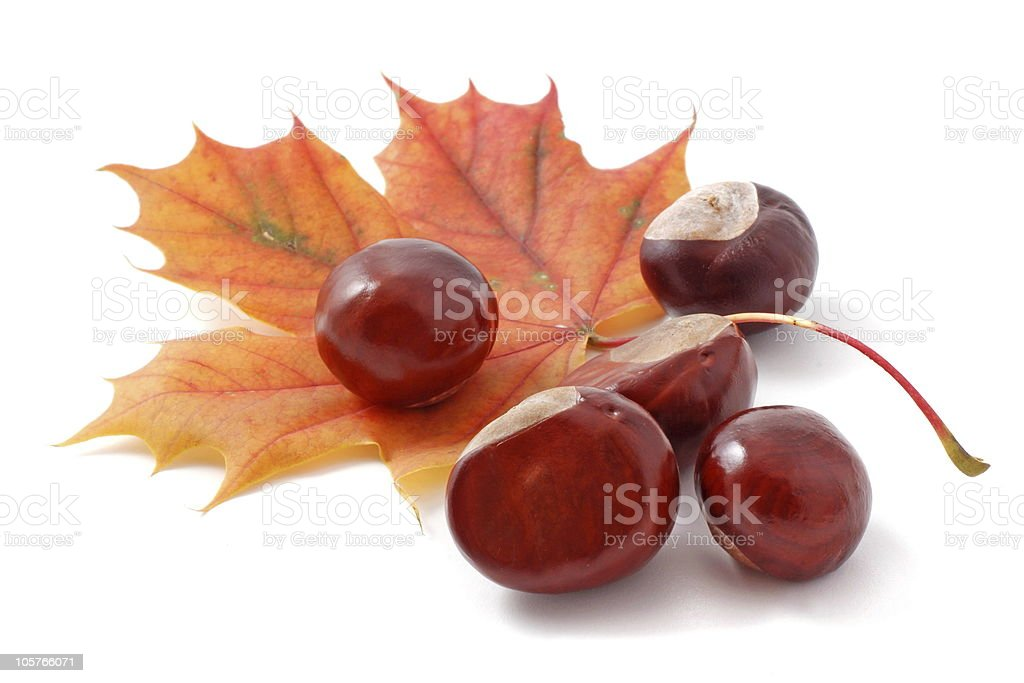 Five chestnuts on top of an orange maple leaf royalty-free stock photo