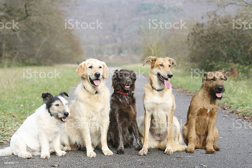 Five dogs sitting on a walking path in a park for dog school stock photo
