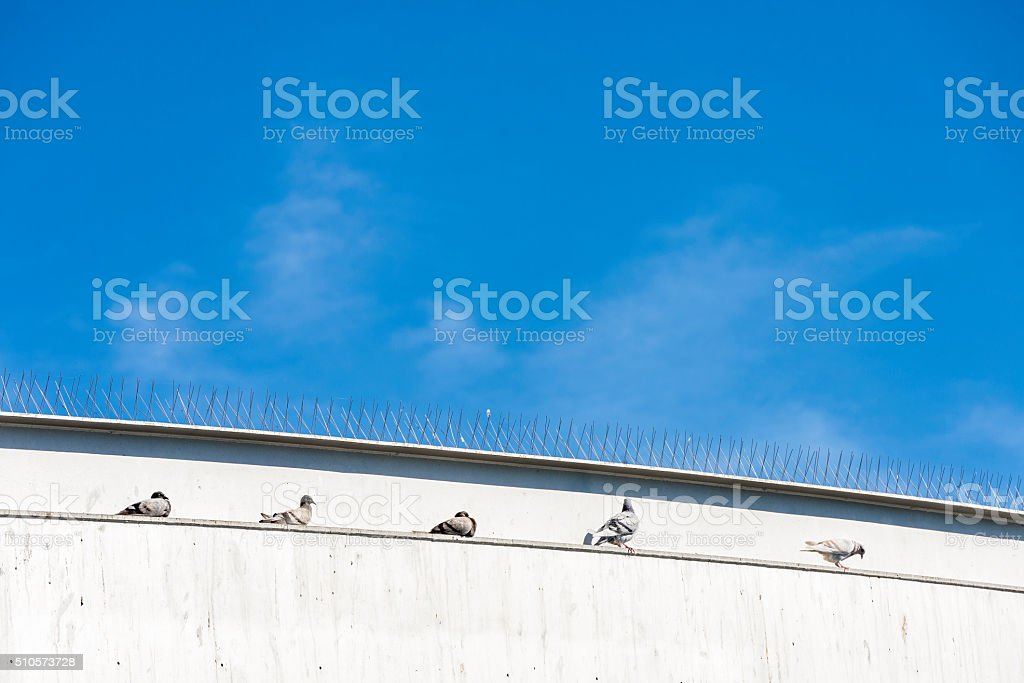 Five doves resting, Barcelona stock photo
