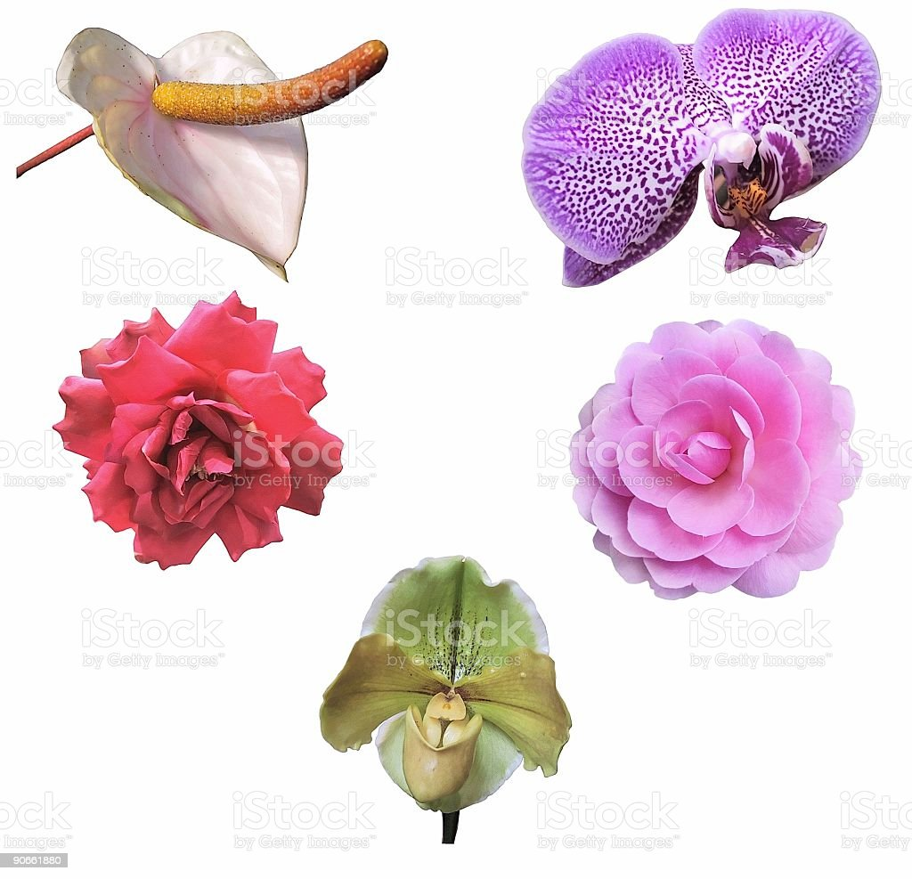 Five Exotic Flowers (Isolated) royalty-free stock photo