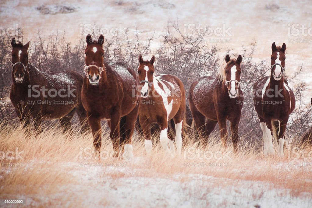 five horses in the snow-covered hills stock photo