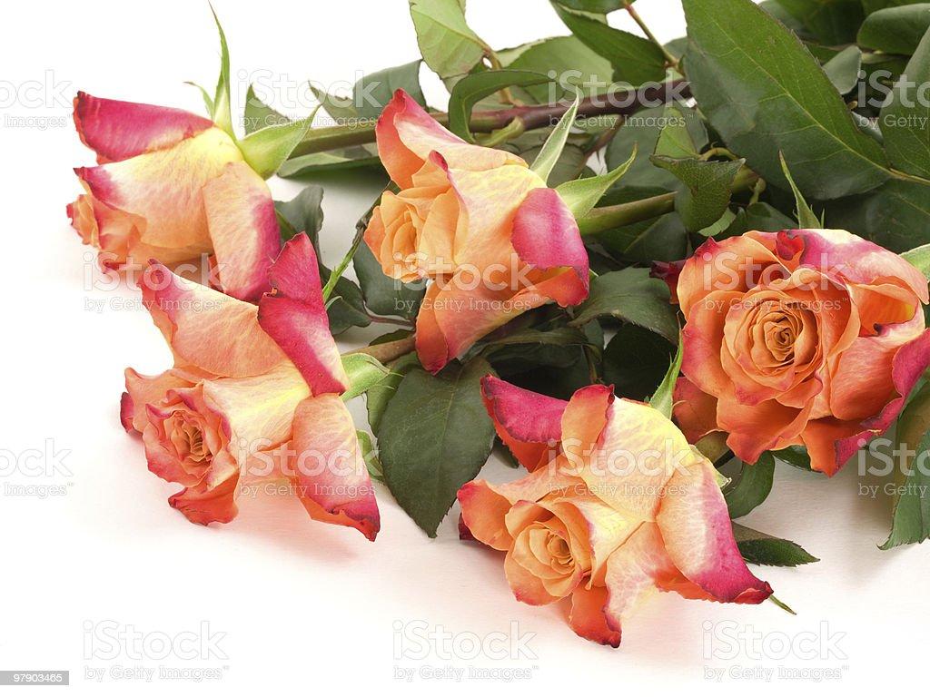Five orange rose stock photo