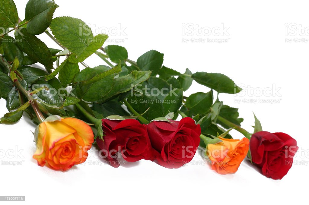 Five roses royalty-free stock photo