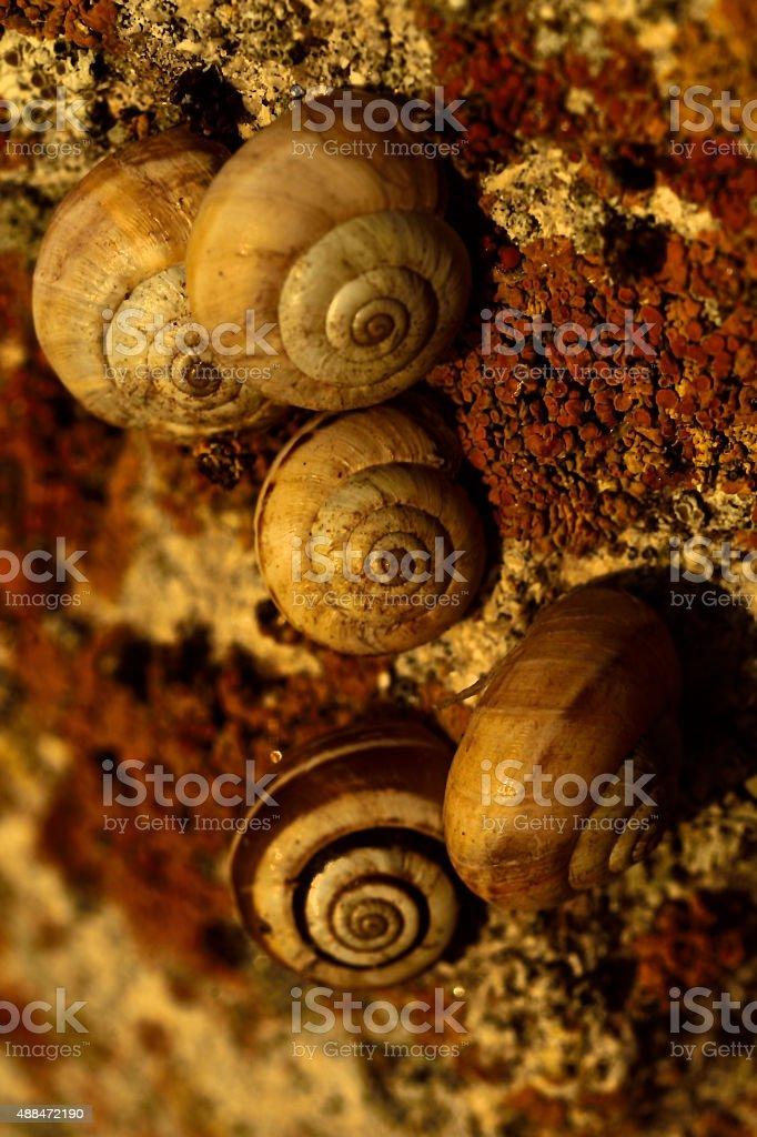 five sea snails stock photo