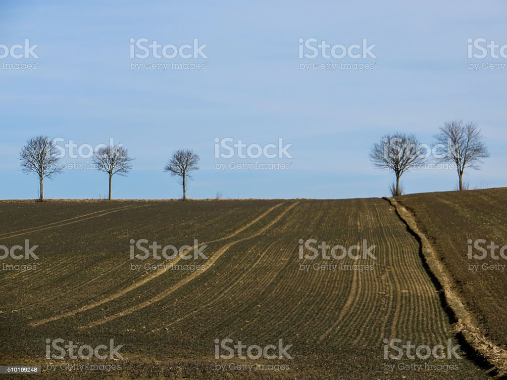 Five trees stock photo