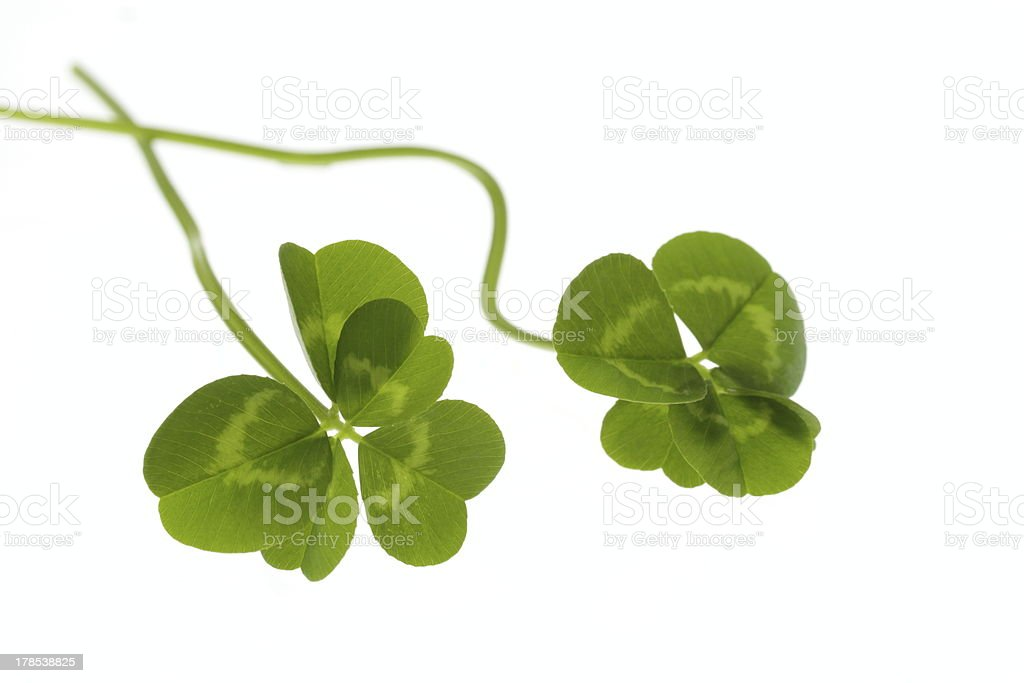 Five-leaf Green clover royalty-free stock photo
