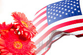 USA flag and red daisy flowers on white.