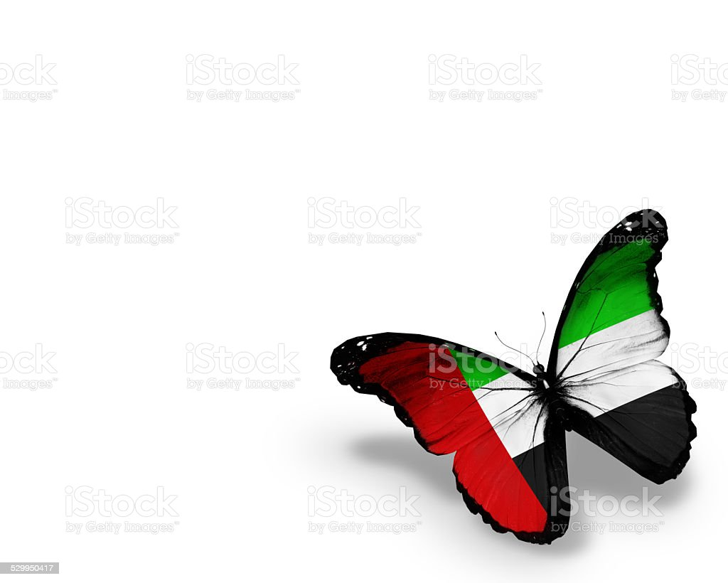 UAE flag butterfly, isolated on white background stock photo