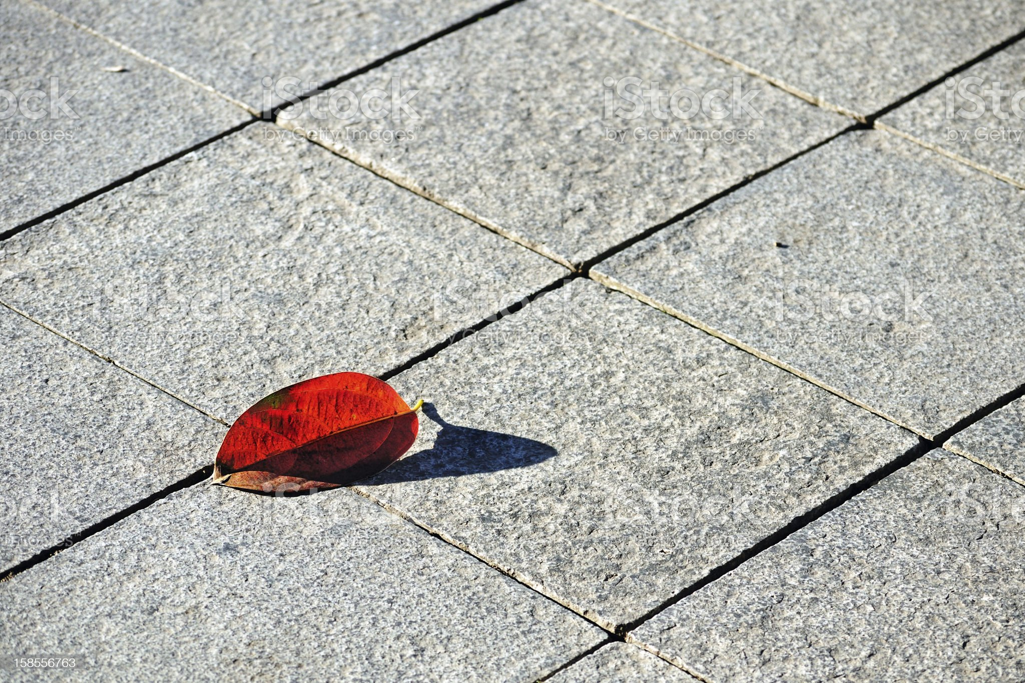 Flagstone pavement with reddened beech leaf royalty-free stock photo