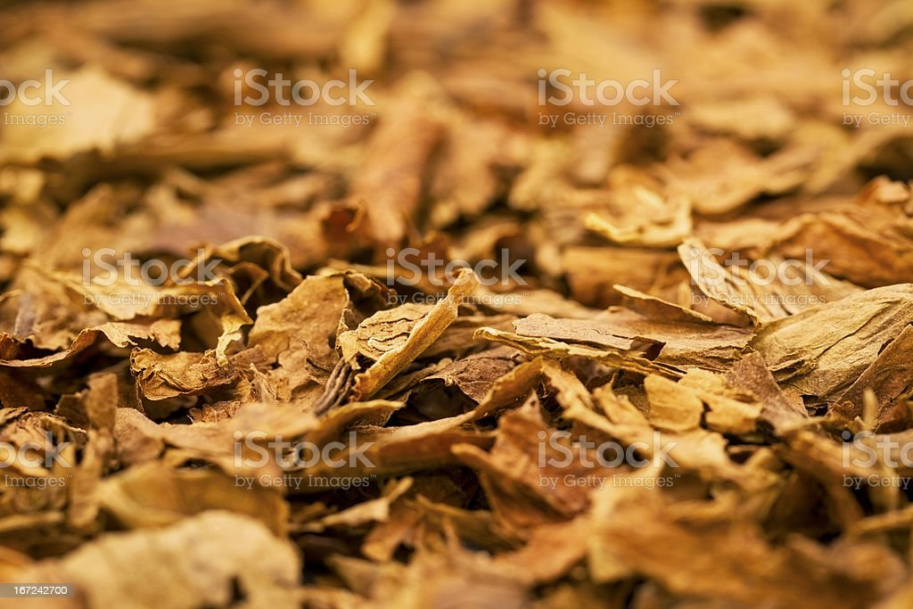 Flakes of brown tobacco as a background stock photo