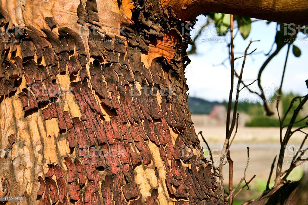 Flakes of Tree Peel royalty-free stock photo