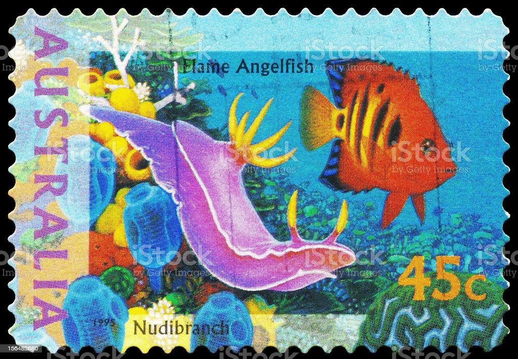 Flame Angelfish stock photo