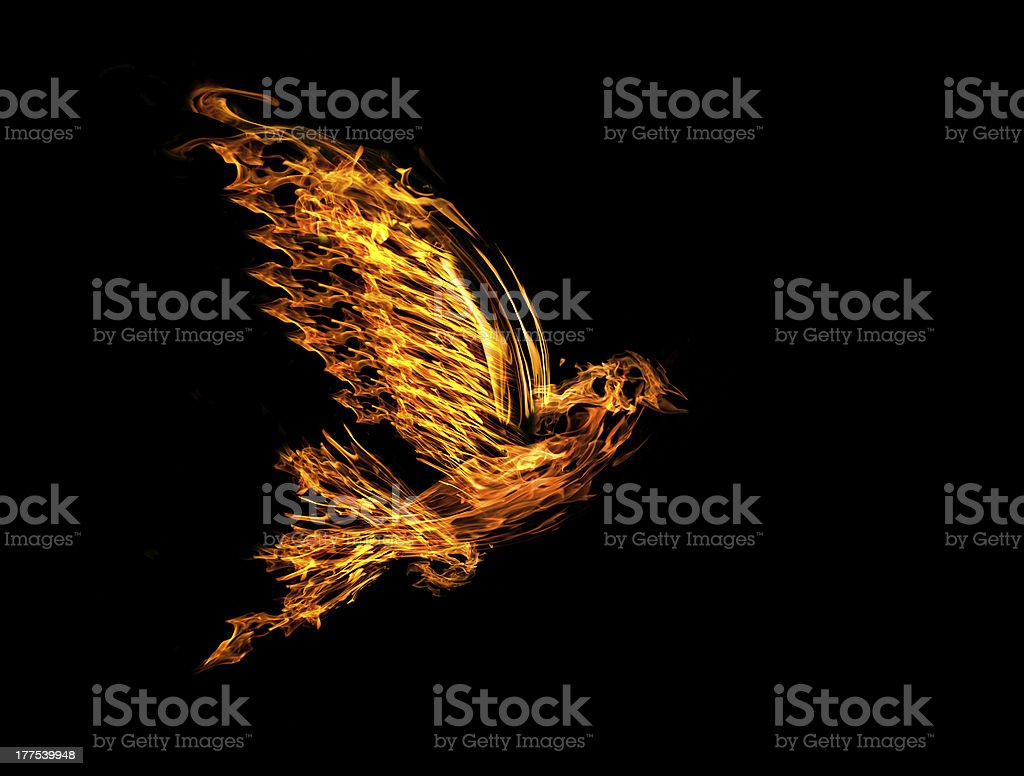 flame flying dove isolated on black stock photo