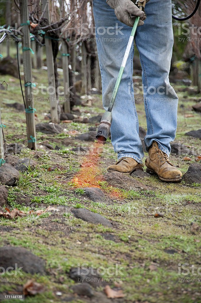 Flame Thrower royalty-free stock photo