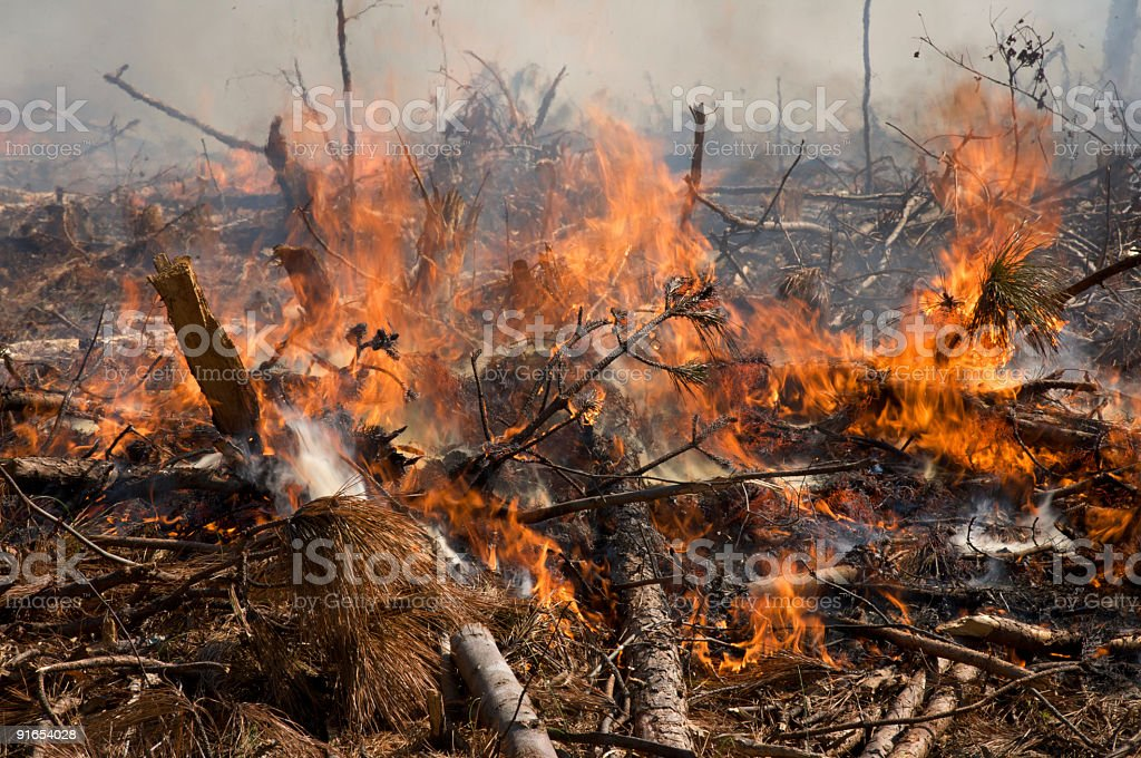 Flames from a prescribed fire stock photo