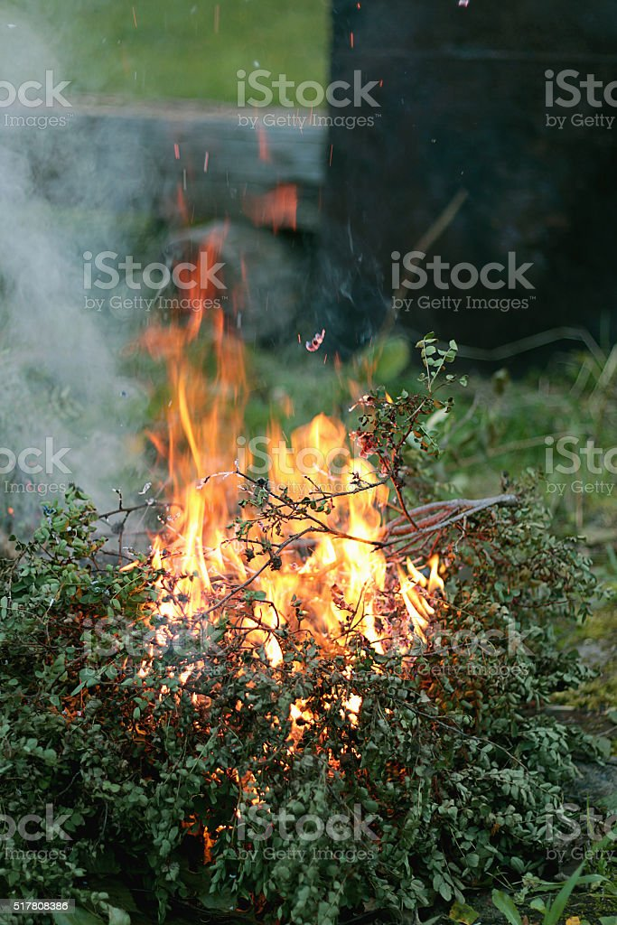 flames of fire burning bush stock photo