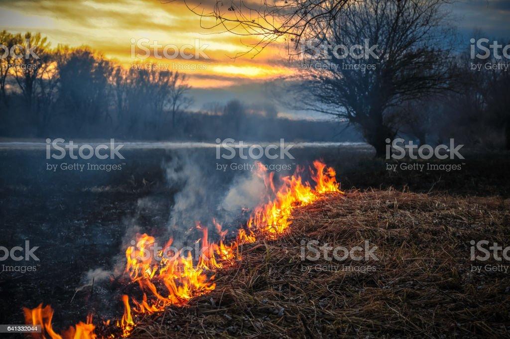 Flames of Winter Wildfire at Danube Bayou Wildlife Refuge, Novi Sad, Serbia stock photo