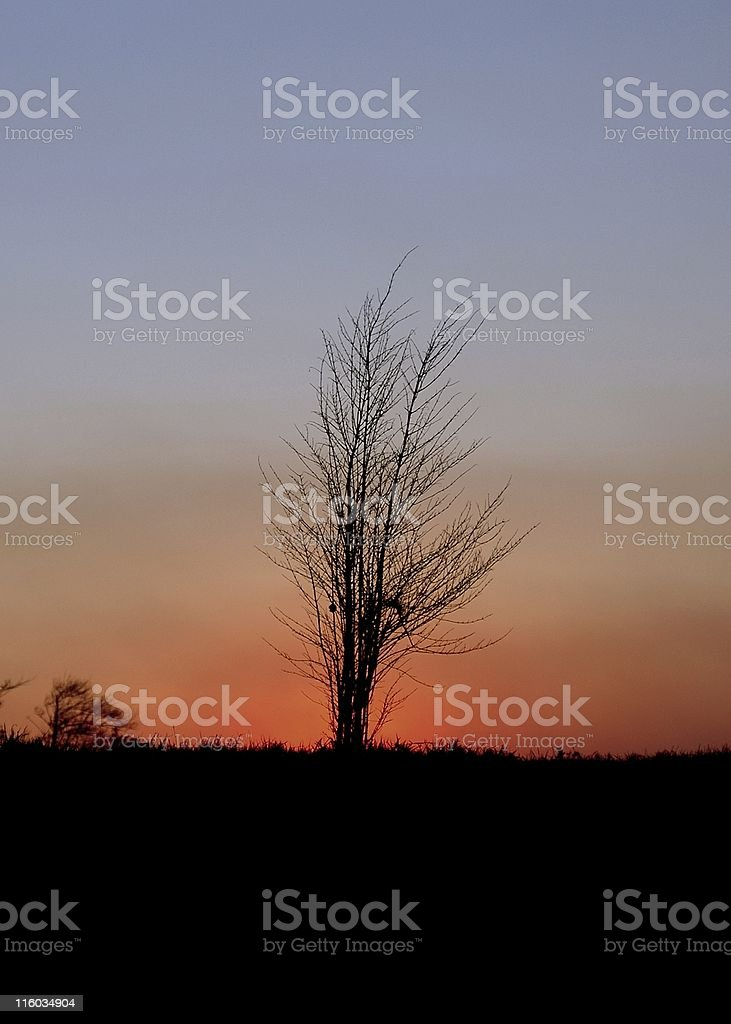 flaming bush stock photo